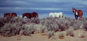 De Na Zin Wilderness, New Mexico.  Photo by Sue Jimenez