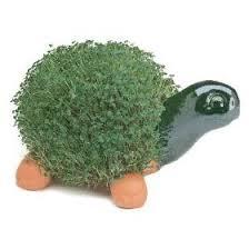 The Chia Turtle