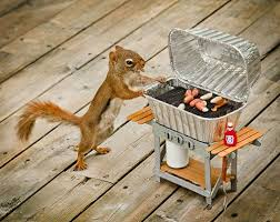"""No, Harold....when I said SQUIRREL BBQ, I was referring to the 2006 edition of ""Joy of Cooking""!  RUN!!"