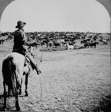 Cattle Drive (Photo Credit:  www.en.wikipedia.org)
