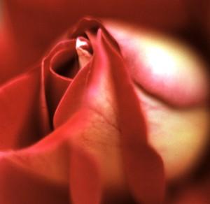 Rose (Photo by Sue Jimenez)