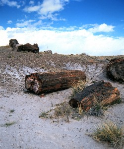 Petrified Forest, Arizona, 1997 (Photo by Sue Jimenez)
