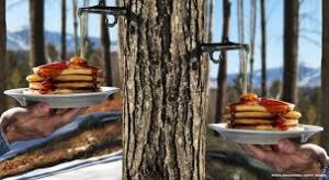 Contrary to popular belief, pure Canadian maple syrup does not come directly from the trees, eh? (Photo Credit:  www.finedininglovers.com)
