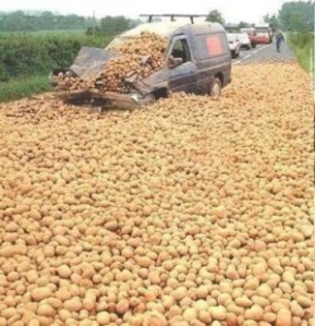 Attack of the killer potatoes? (Photo Credit:  swampyacresfarm.com)