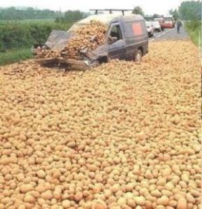 Attack of the killer potatoes? (Photo Credit:  swampyacresfarm.com)