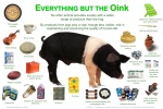 Just a few things the pig gives up his life for humankind (Photo Credit: www.animalsmart.org)